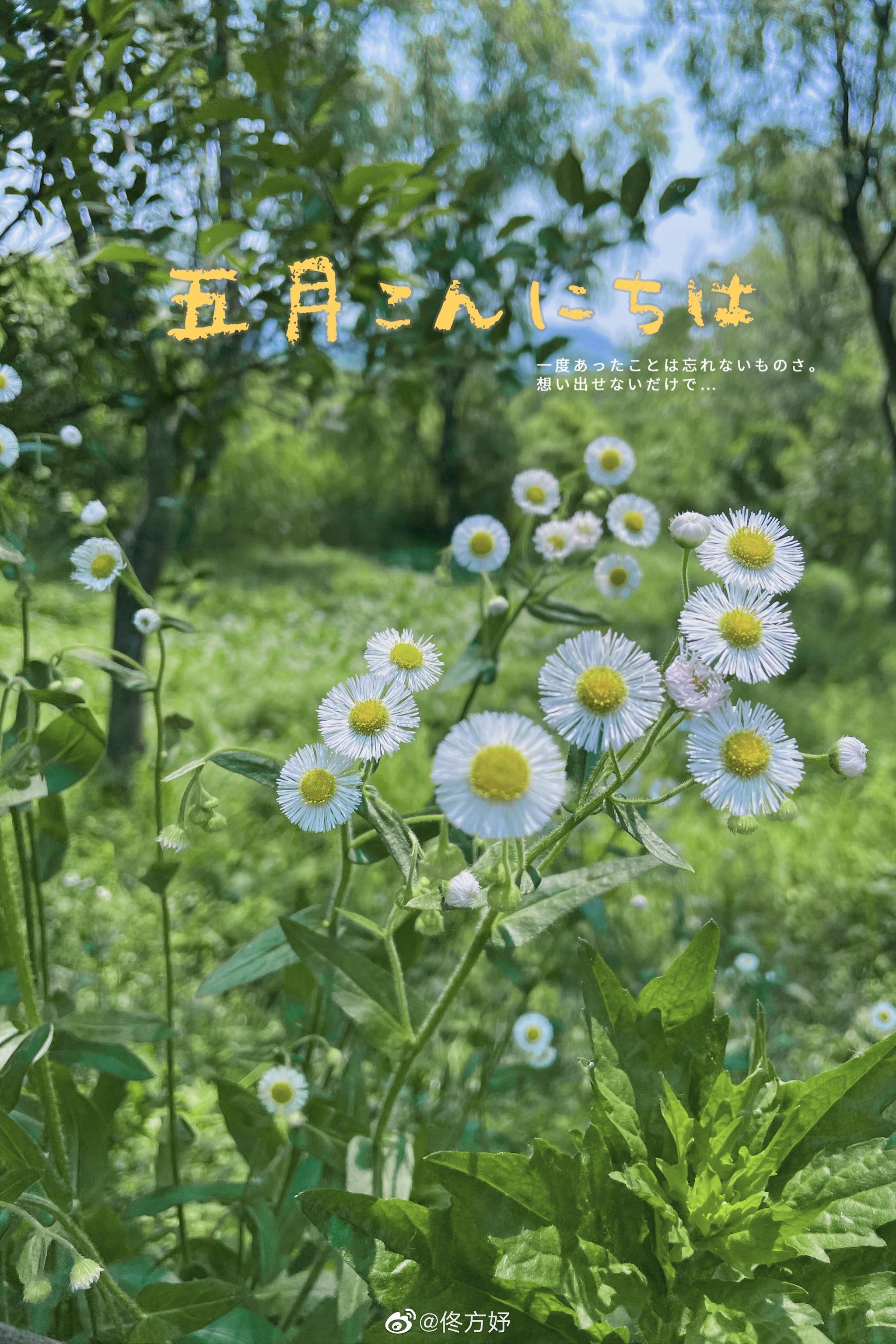 喜欢杭州的原因不仅是人文气息,还有环境的优美……