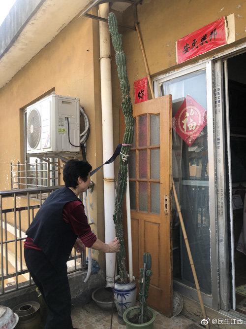 """九江一仙人柱长成""""擎天柱"""" 总身高2.4米"""