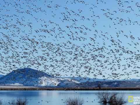 鸟类迁徙的秘密