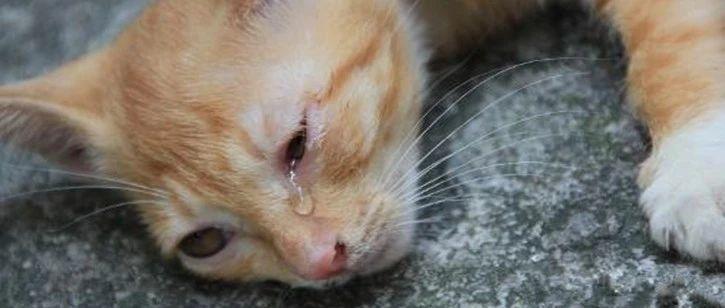 女孩看到虐猫视频义愤填膺,殴打虐猫者被判刑!