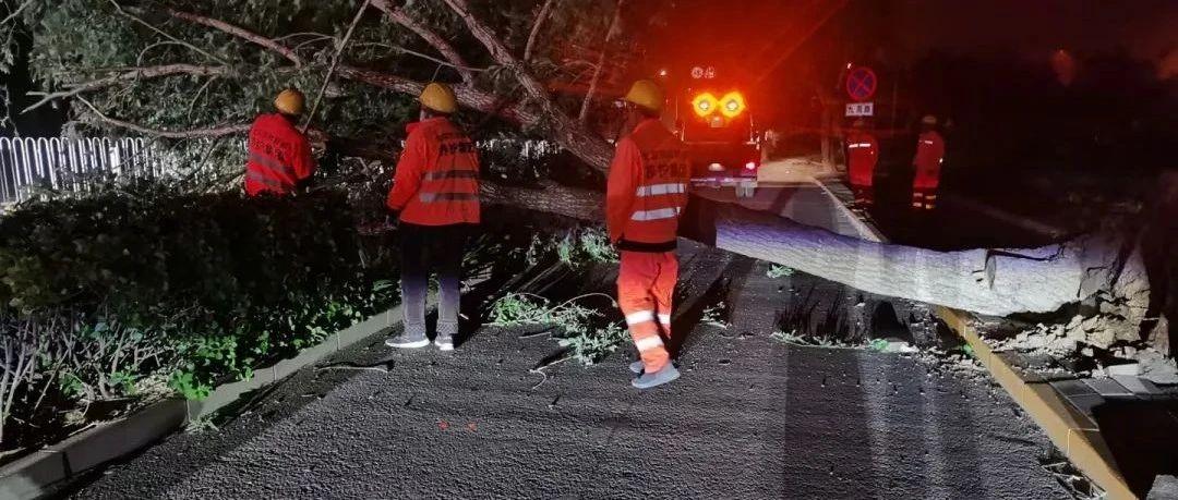 北京大风致41棵树木倒伏,园林绿化部门连夜清障排险