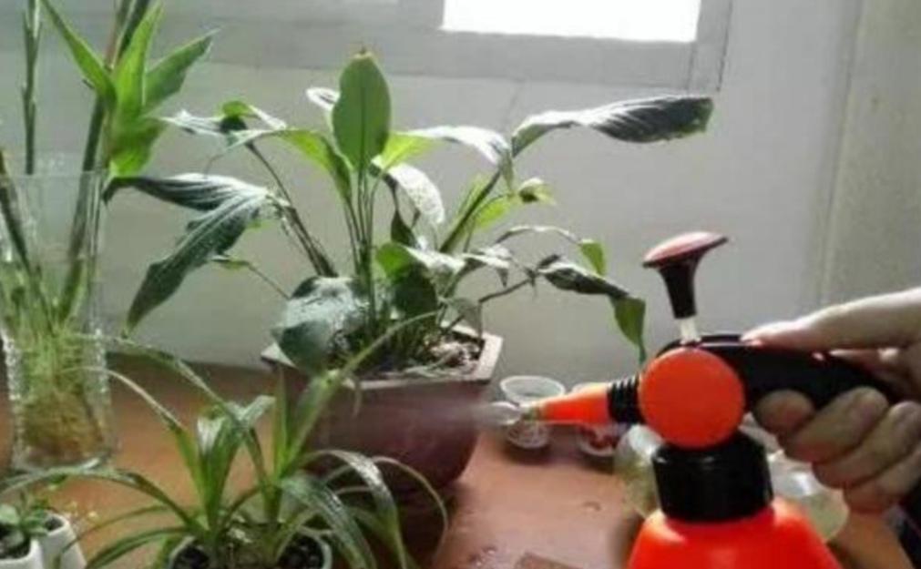 """在家自制""""杀虫水"""",花盆里喷一喷,赶跑小虫子!"""