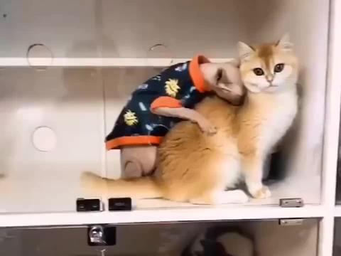 无毛猫:姐,这皮草哪买的呀?手感真好!猫:想要吗?