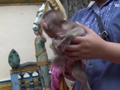 小猴子无故躺在地上哭闹,还没完没了的,真让人讨厌