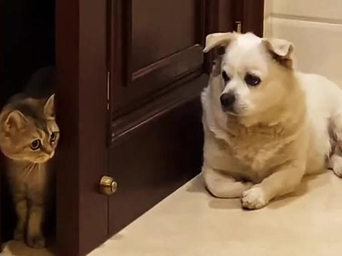 猫咪:不好意思狗子大哥,我只是走错了,打扰了!