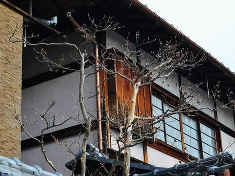 京都小路太迷人了,让人忍不住想要拍照
