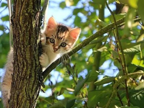 优秀作文 : 《可爱的小猫》《游招宝山》《我的书屋,我的梦》