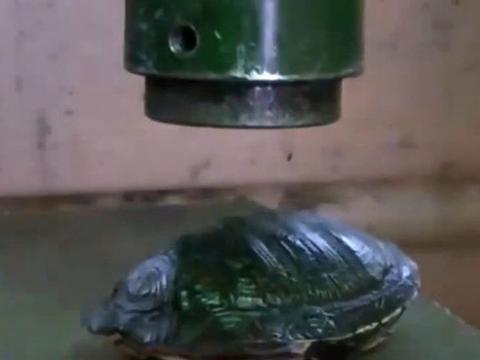 男子为证明龟壳硬度,把乌龟放在冲床下面,接下来让人看傻了!