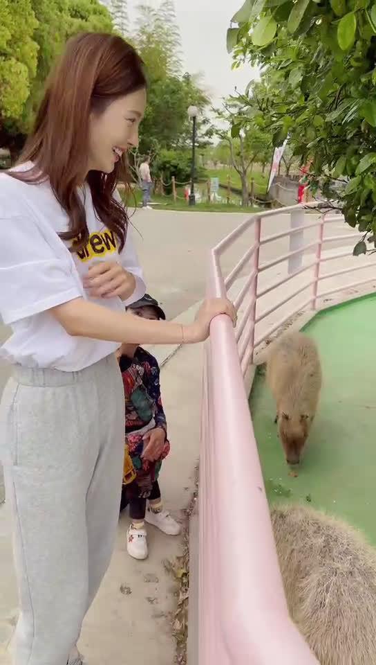 晒出自己的日常边角料,带大家线上参观动物园……