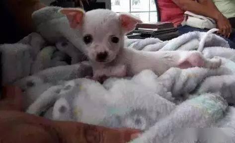 常喂一只怀孕流浪狗,狗狗生产后却在家门口留下一只奇怪的狗宝宝