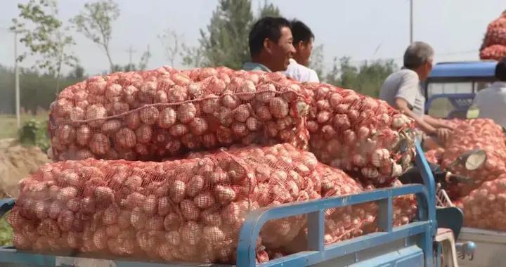 丰县老家的大蒜