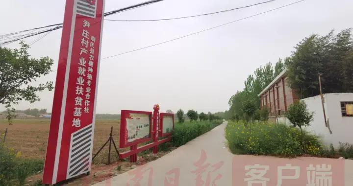 小芦笋长成村里富民新产业