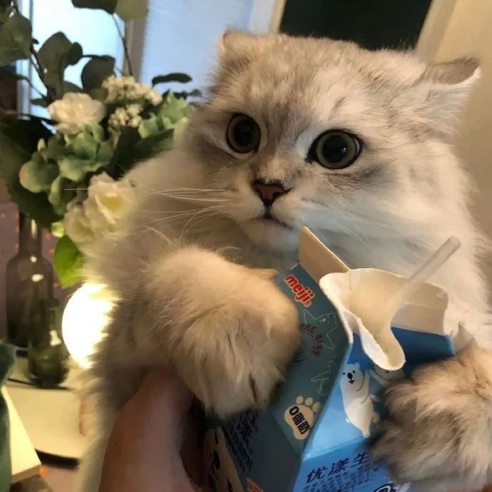 充满了对食物的渴望!谁能对小猫咪说不呢!