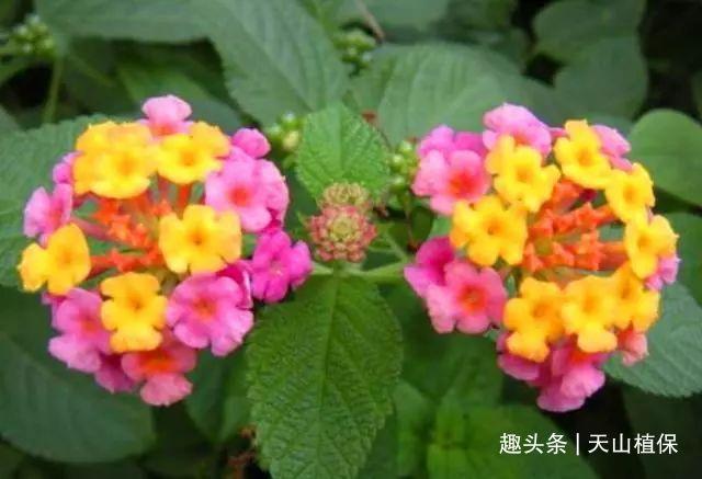 一种野花农村很常见,整株都有毒,却不知道它是上好的植物