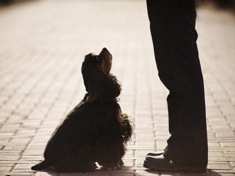 猫和狗,不传播新型冠状病毒,如果爱它们,请勿轻易抛弃!