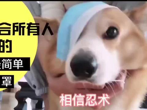 不同狗出门佩戴口罩