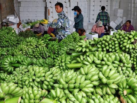 被小米蕉爆单点燃的广西村庄背后:农地云拼激活农产品流通体系