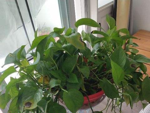 吊起来养的花,给家里省空间,还很美观!