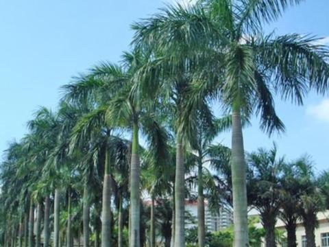 如果牛顿当年坐在椰子或榴莲树下的话,最轻也得脑震荡