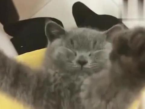 主人趁猫咪熟睡时,捏住它的鼻孔会有什么反应