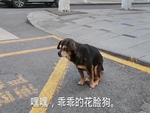 大街上一条流浪狗,痒的满地打滚,没主人爱的流浪狗太惨了