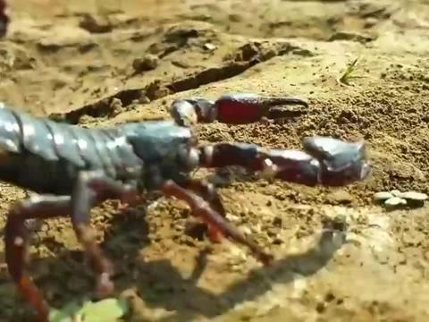 干裂的鱼塘,突然从裂缝钻出一条大鱼,嘴里爬出好多蝎子,好吓人