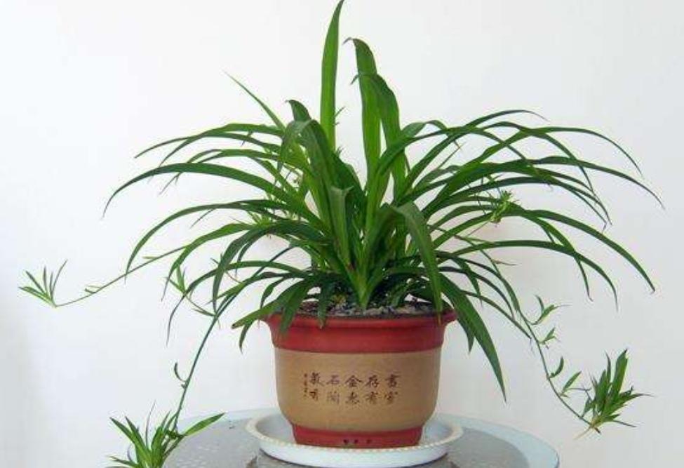 室内太干燥,摆几盆绿色植物,漂亮美观空气好!