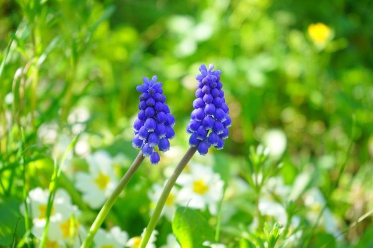 5月份内,缘分与桃花拨开云雾,真爱袭来,余生到白头的四大生肖