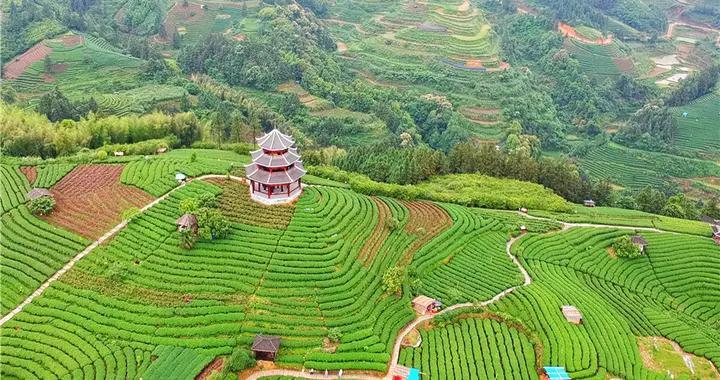 广西有个仙人山,中国大陆早春第一茶就出自这里,环境清幽如仙境