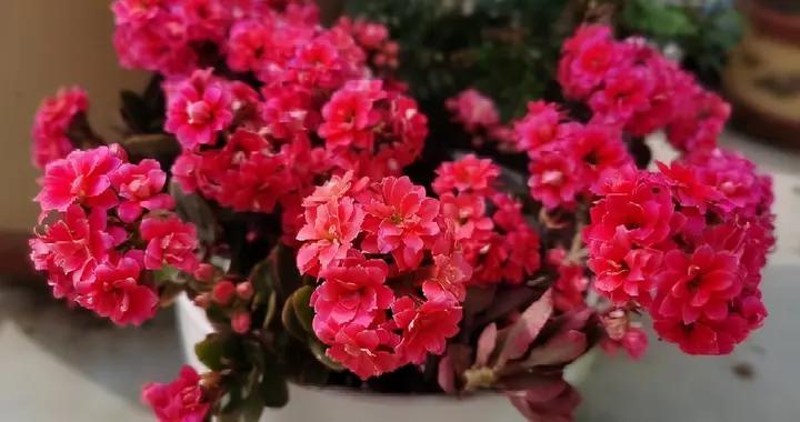 3种花真的太顽强了,一个枝一片叶,遇土就长根,扦插很简单