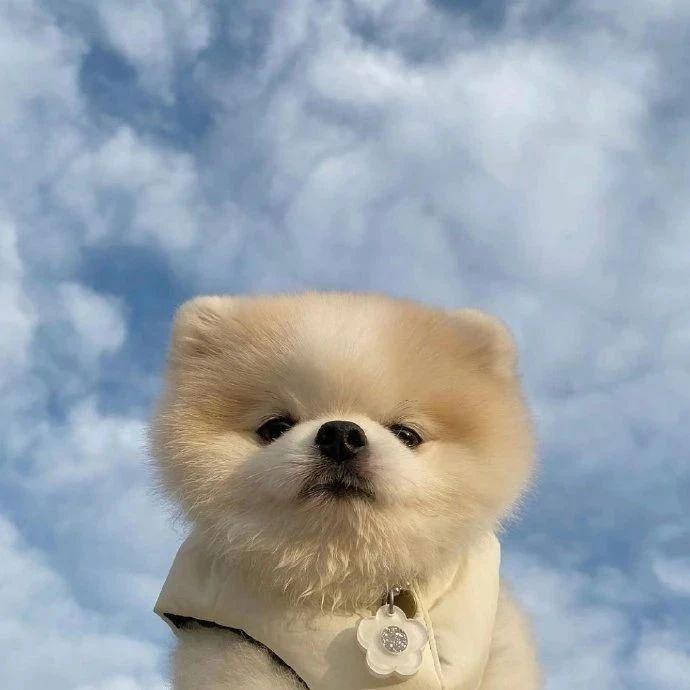 蓝天下的可爱小狗狗们!都可当头像系列!