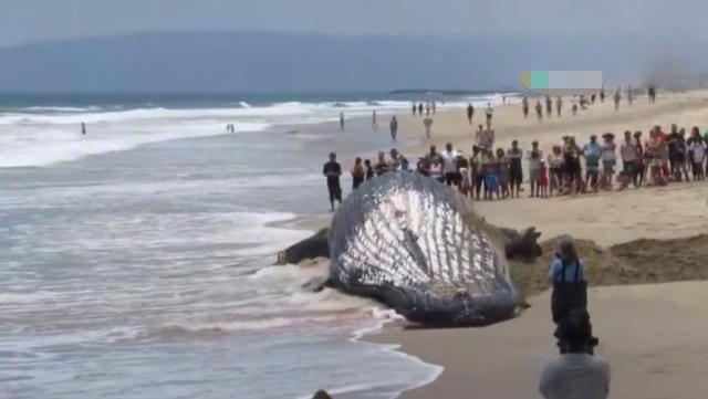 男子海边散步发现庞然大物,报警后海滩聚集大量围观游客