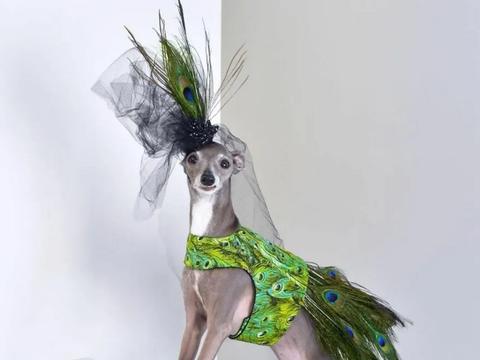 """路边的流浪狗,被画家领养6个月后,却成了狗界的""""模特"""""""