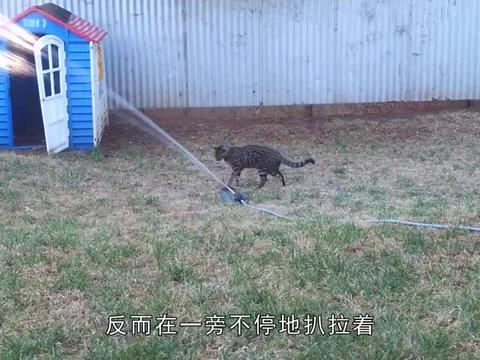 小奶猫被迫洗澡,无助的模样太可怜,满满的求生欲
