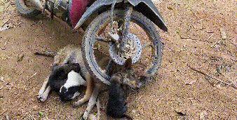 流浪狗遭遇车祸,车主弃车逃走,错过救援时机,遗留3只小狗受苦
