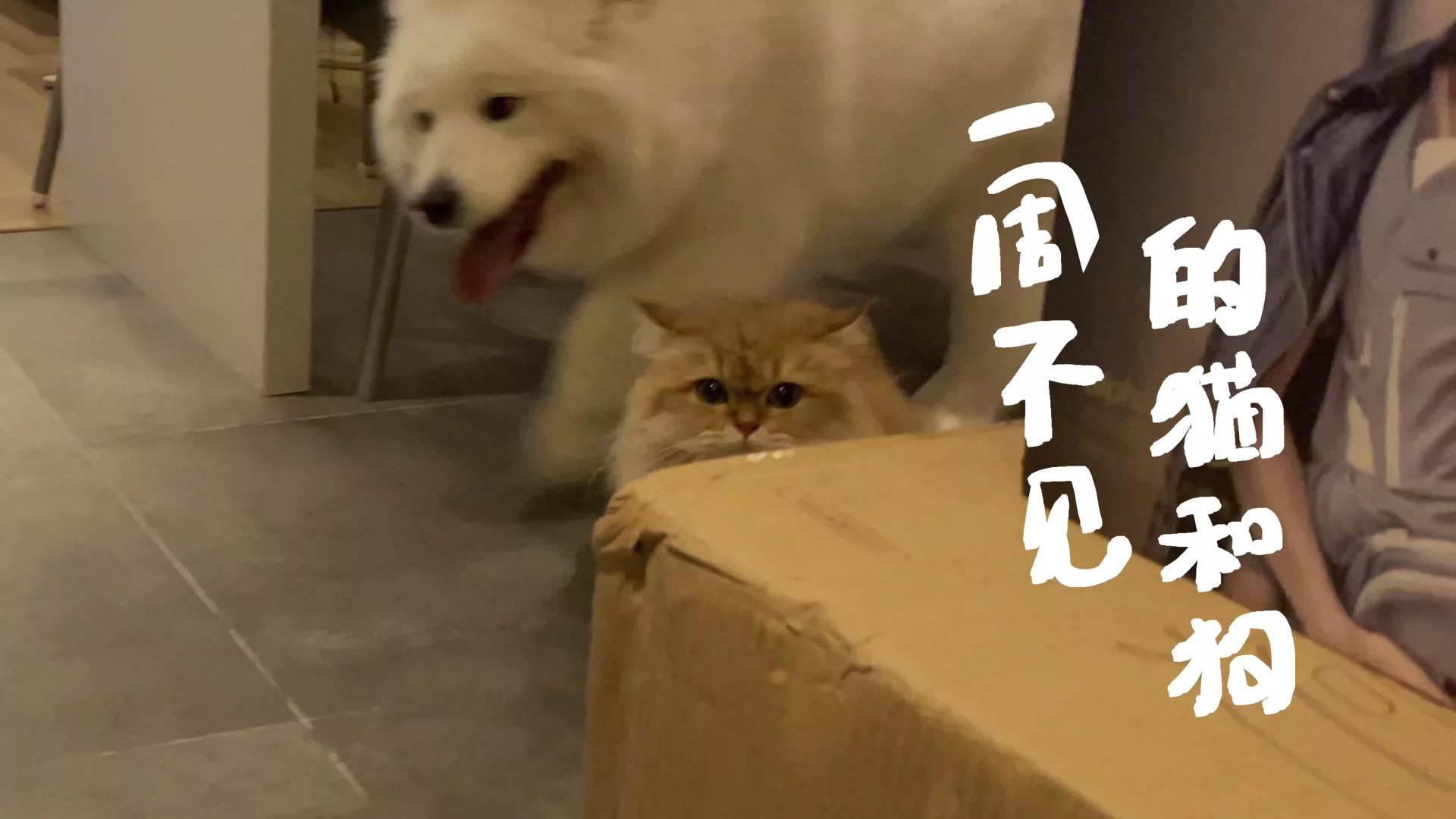 猫和狗表达想念的方式!就是正向和反向表达吧?