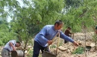 农民在耕地上种树,是属于违法行为吗?应该怎样区别和界定?