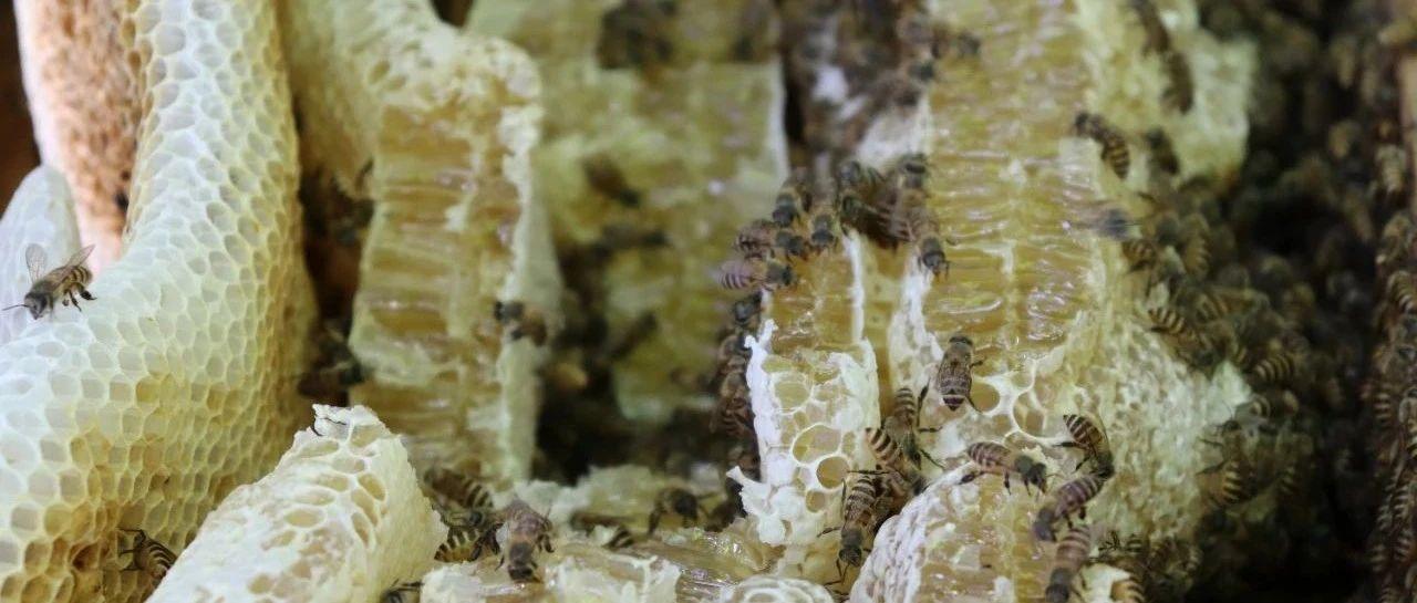 """海南春天大赏 我为""""蜂""""狂•琼中探蜜进行中(篇三)~蜂影花香问归处,云深山上有人家~~~"""