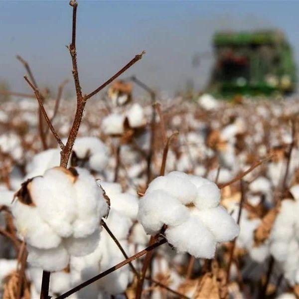 种棉花让我们的生活越来越好