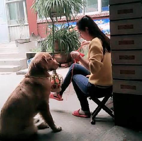 女子在自家院子中打毛衣,狗狗蹲在身边,它的行为太暖心了