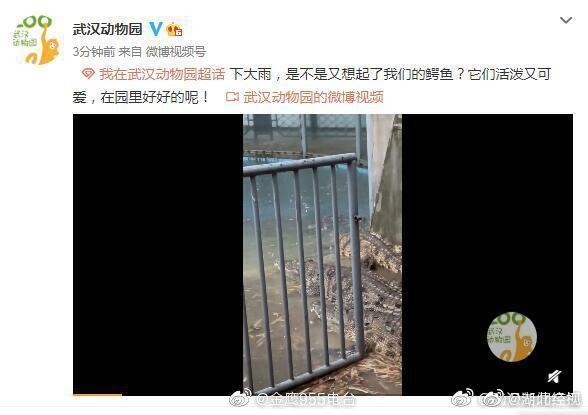 因暴雨武汉动物园鳄鱼跑出系谣言,武汉动物园:鳄鱼在园内好着呢