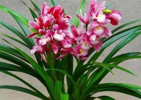 跟着老花农学养花,阳台摆上1种花,养人又养心