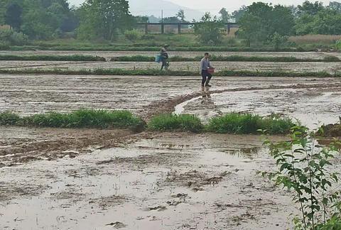 湖南永州有一农民发明奇怪的播种方式,一天能播种一百亩田