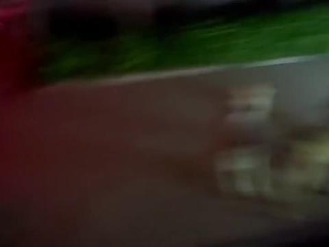 """女子单位停车,被一群狗狗360度""""全狗影像""""包围,网友:操碎心"""