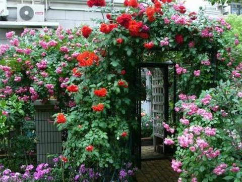 刘阿姨的退休生活:70㎡小院子,栽满花卉美成花海,真令人羡慕