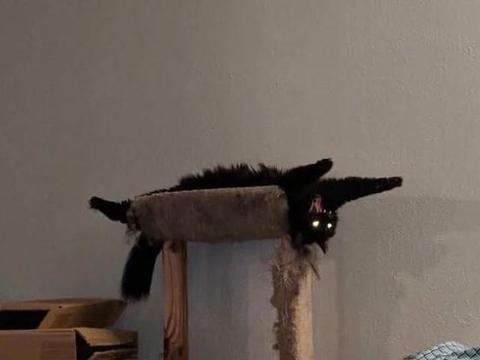 看起来乖巧的猫咪其实还有另一面,被抓拍时的表情好像怪物附体