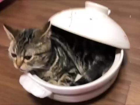猫咪爬进砂锅偷吃,吃完趴在砂锅里不出来了,猫把砂锅当窝了