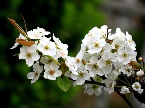 5月份期间,缘分和桃花和谐相处,收获幸福共度一生的四大生肖!