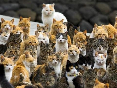 """日本""""猫岛"""":猫的数量超5万,吃光岛上老鼠后,竟自学下海抓鱼"""