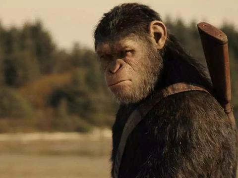 我国用实验猴卡美国脖子?还真不是,实验猴已成为重要战略资源